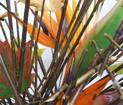 Strelitzia - Crane Flower, Bird of Paradise, Birds, Strelitzia