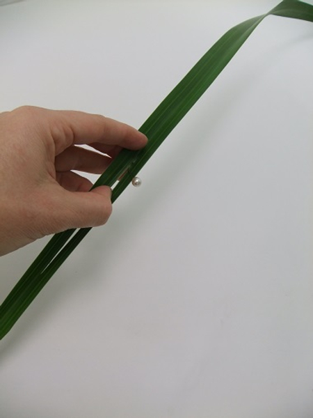 Split a long leaf to remove the hard vain