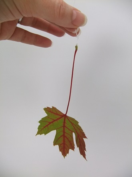 This gives the leaf a straight but natural fall