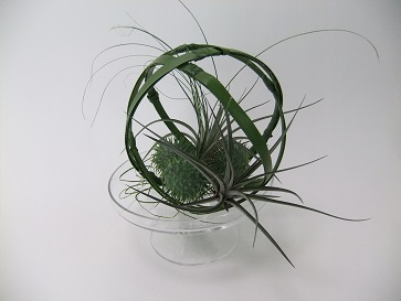 Wired foliage around Cucumis and Tillandsia