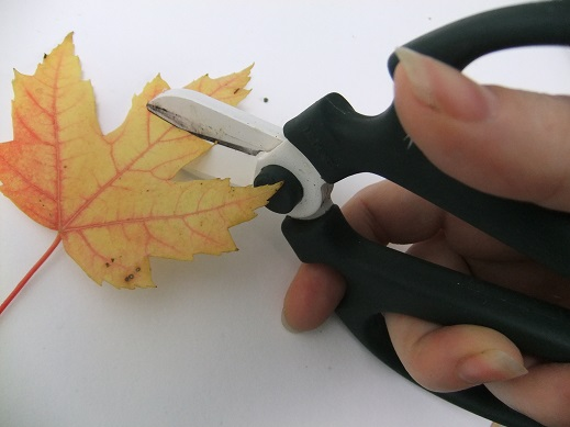 Cut the tip of the leaf flat.