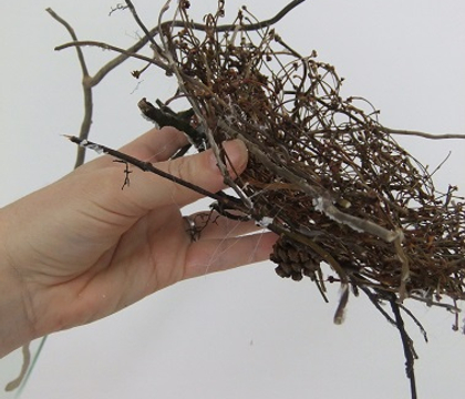 Suspending the twig nest