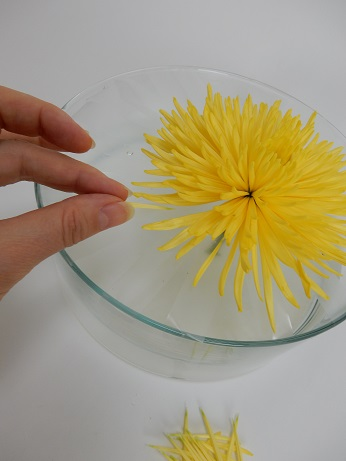 Carefully place petals to radiate out from the chrysanthemum