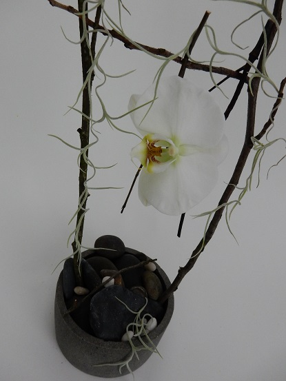 Phalaenopsis orchid, twigs and Spanish Moss