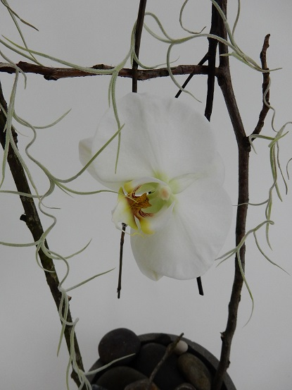 Phalaenopsis orchid on a twig swing