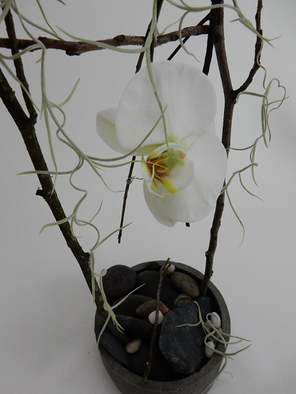Wire a twig swing for the Phalaenopsis orchid