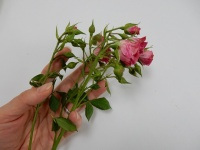 Perking up roses (Please... don't ever do this, anywhere but at home, and only for yourself!)