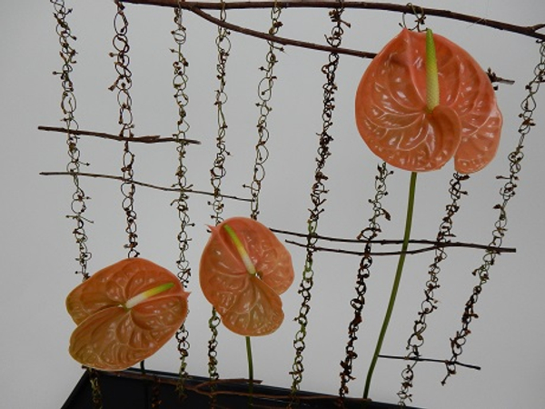 Anthurium suspended from twig chains
