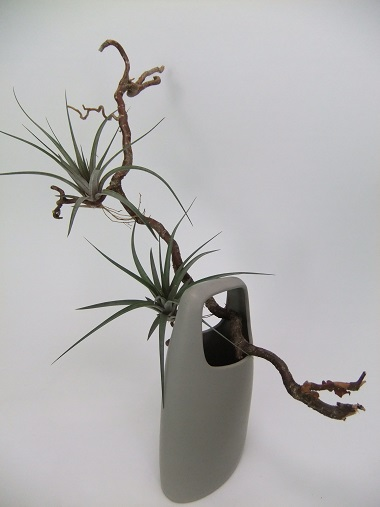 Simple and easy way to design with air plants