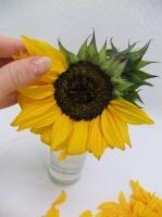 Sunflower Disk Floret