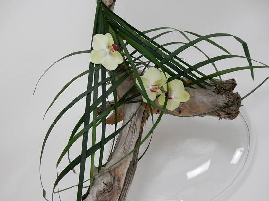 Phalaenopsis orchids, grass and driftwood