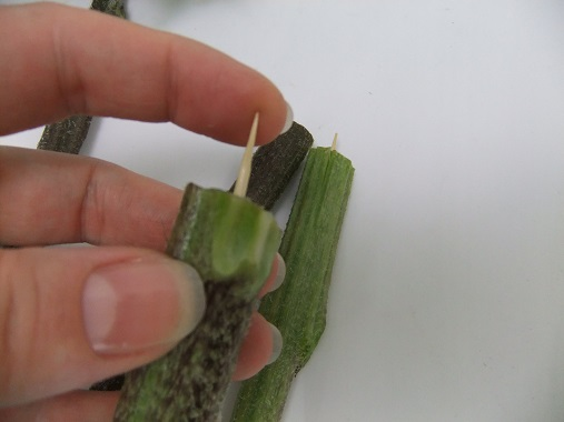 Press the sharp skewer into the cut-off from the flower stem