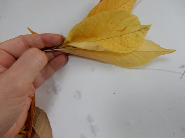 Gather fall leaves stem side pointing into your hand