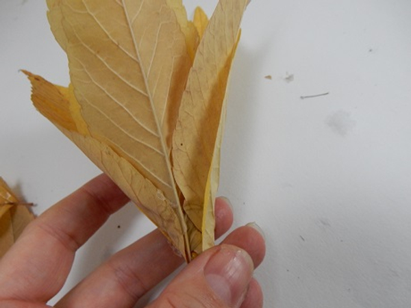 Secure the leaves with a few drops of glue to make it easier to handle
