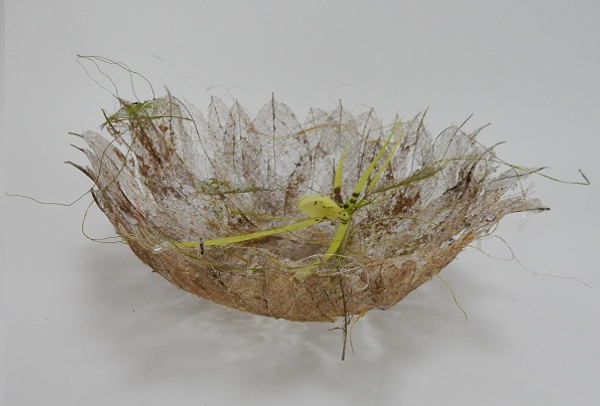 Spider orchid in a skeleton leaf bowl