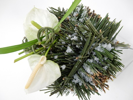 Anthurium and pine christmas design