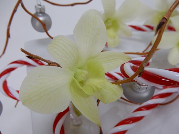 Orchid and willow Christmas design