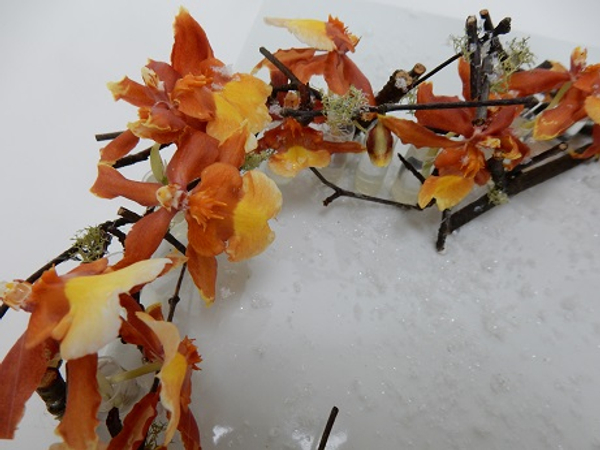 Twigs, moss and oncidium orchids