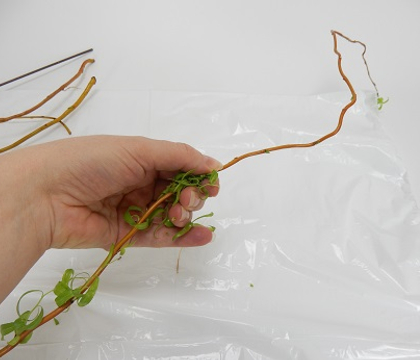Stripping foliage from weaving stems