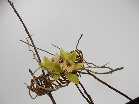 Cymbidium orchids in a willow armature
