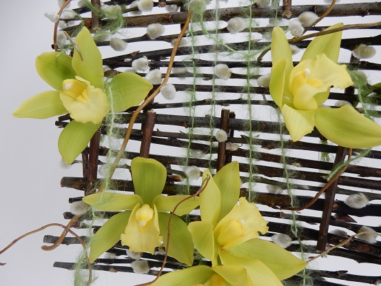 Cymbidium orchids on a willow blind