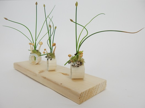 Display delicate flowering stems