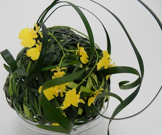 Grass sphere with Oncidium orchids