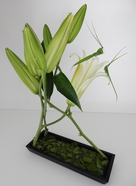 Three stem lily Hana Kubari