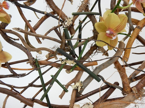 Armature made of Phalaenopsis orchid stems with lichen and roots