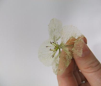 Skeleton Hydrangea Petal Blossoms