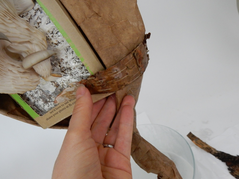 Cover the box and the paper with ripped pieces of bark