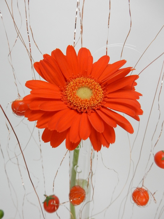 Gerbera Daisy on copper wire