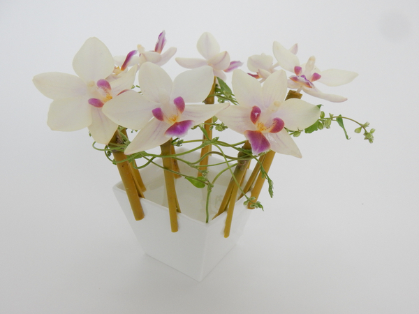 Phalaenopsis orchids and bamboo