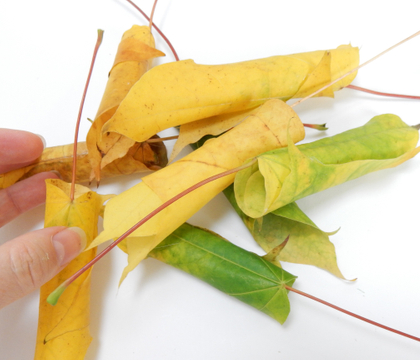 Roll hundreds (yes! hundreds) of autumn leaves so create a natural, upright flower frog