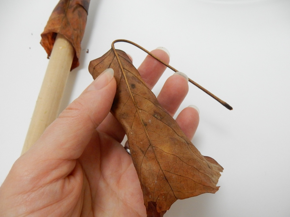 Because the leaf is dried it retains the tube shape and the stem remains curved