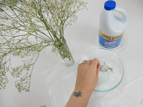 Let the Gypsophila dry naturally and place sprigs in a deep container