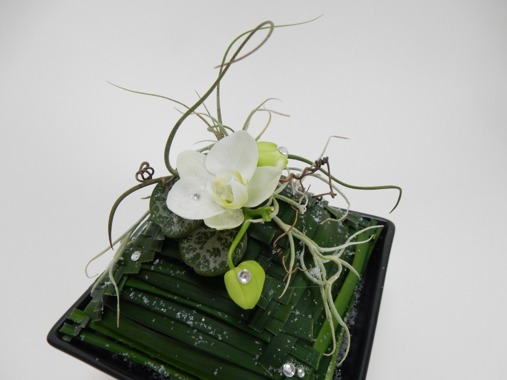 Phalaenopsis orchid, air plants, monkey grass, rosary vine and vine tendrils
