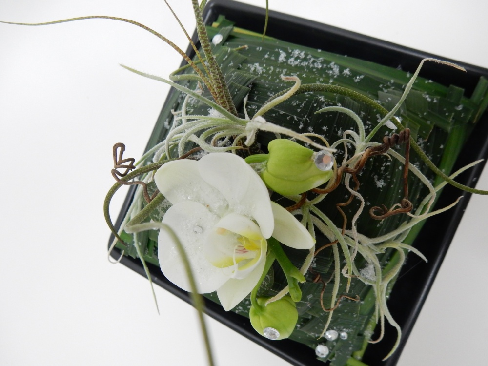 Phalaenopsis orchid, air plants, monkey grass, rosary vine and vine tendrils snow design
