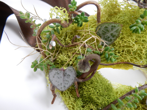 Succulents and moss mask.