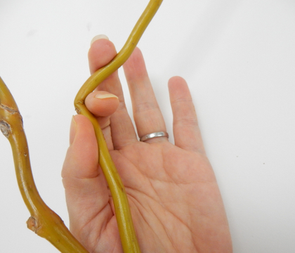 Sprouting willow armature