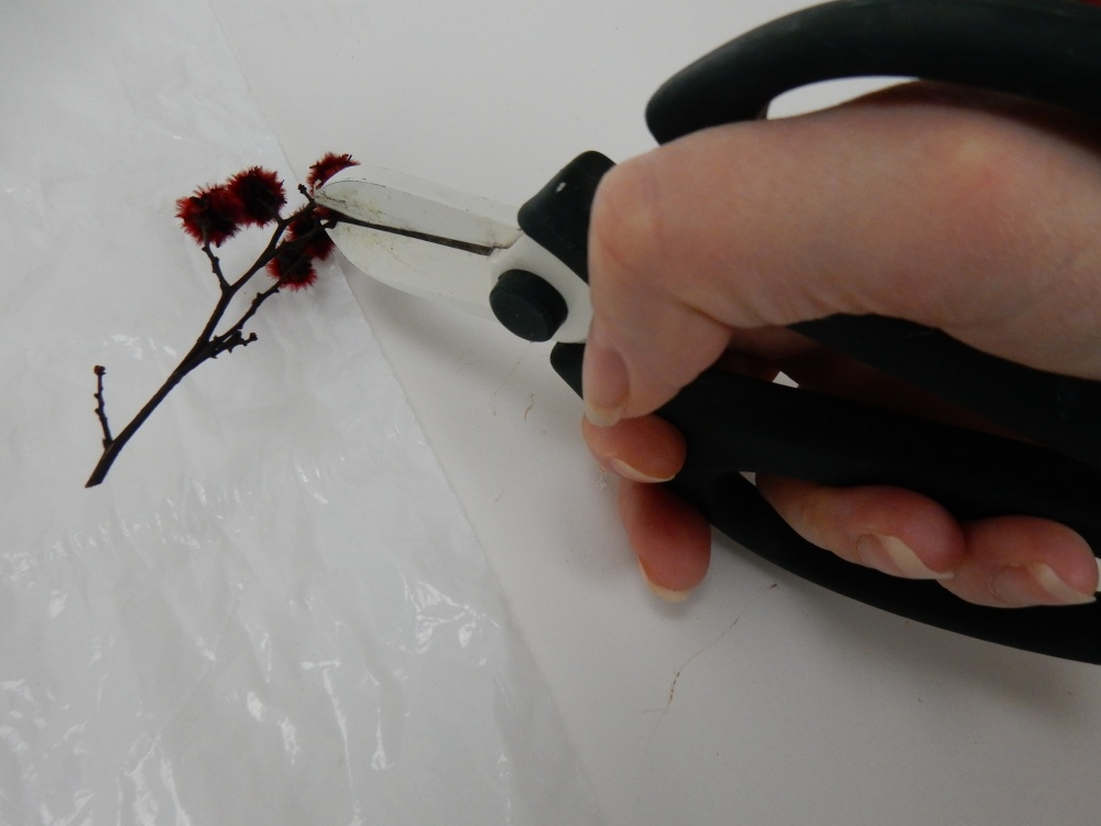 Snip the Stillingia stems to only have the delicate stems
