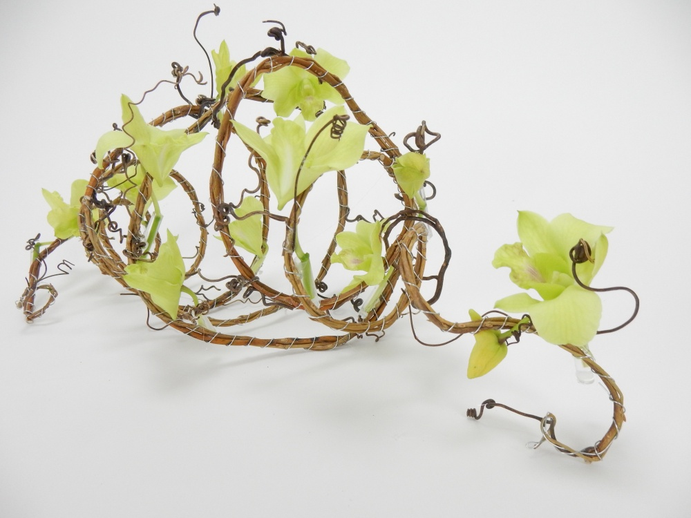 Willow and grape vine coil