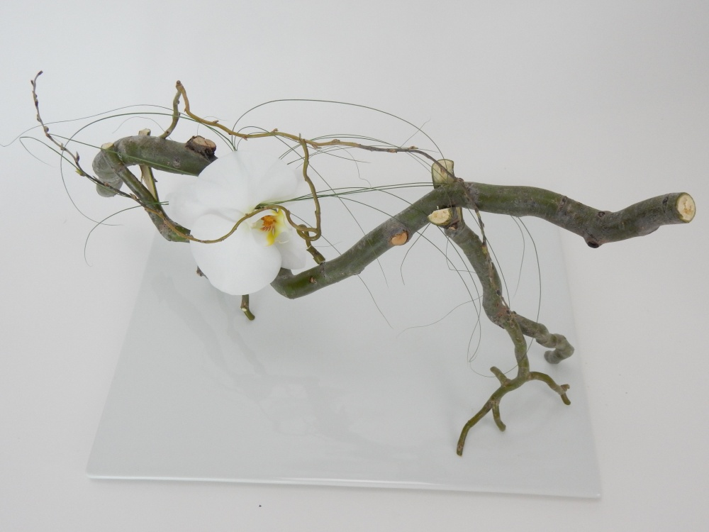 Free standing willow twig armature with a hidden water source for a Phalaenopsis orchid