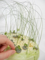 Sliced Grassy Cabbage