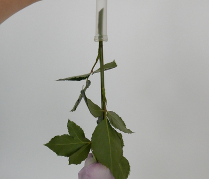 Cut a plastic vial to make a top-up-able water source for upside down hanging flowers