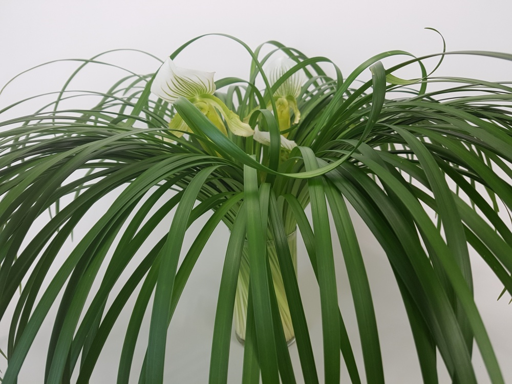 Curl lily grass to drape over the design