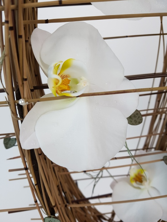 Phalaenopsis orchid in the reed cradle armature