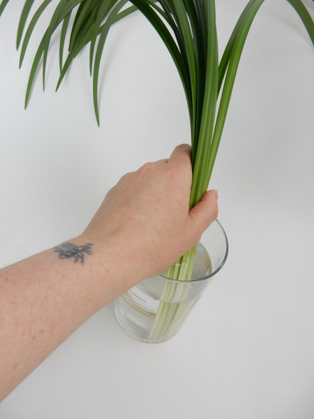 Place a bundle of lily grass in a vase.