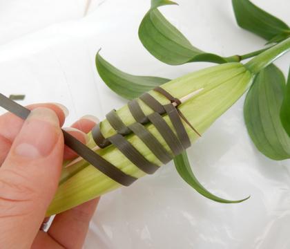 Binding a lily bud