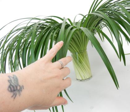 Lily grass spiral in a vase